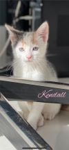 Kendall Star