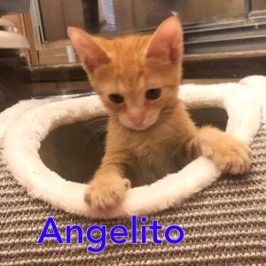 Meet gorgeous and sweet Andrea and Angelito This adorable brother and sister are healthy vaccinate