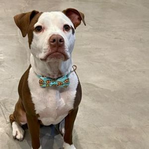 Hi guys Im Dexter but dont let my name fool you - Im a lover not a killer My foster