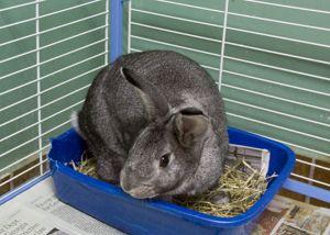 Uranus Bunny Rabbit Rabbit