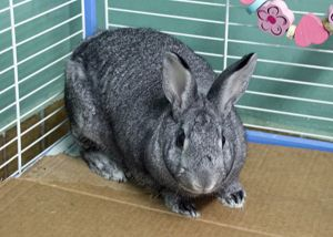 Saturn Bunny Rabbit Rabbit