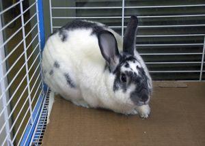 Jupiter Bunny Rabbit Rabbit
