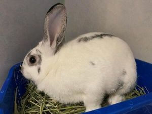 Hello my name is Mercury I was born at the San Gabriel Valley Humane Society along with my sibling