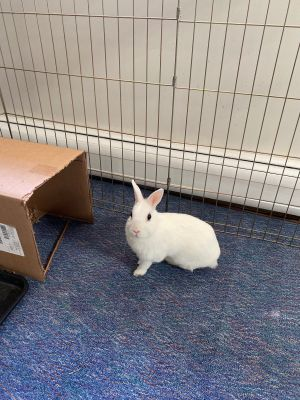 Greta is another little bunny that was carelessly tossed aside by her owners Sh