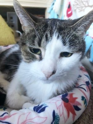 Iris is a beautiful 16 year old cat She is a sweet independent lady that loves