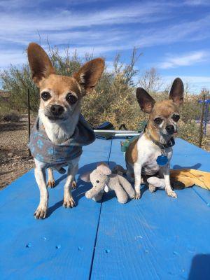 Chico and Diamond (Bonded Pair)