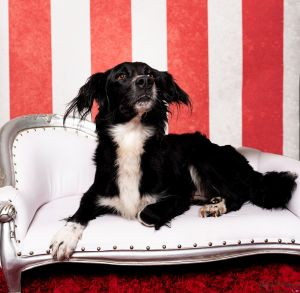 Are you in search of a friendly energetic companion to go on adventures with you Meet Lucy Lucy i
