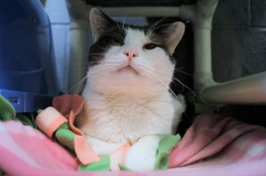 Talon is another senior that was an owner surrender when they could no longer care for for him and h