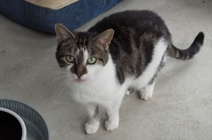 Michelle is about 8 years old and was signed over with Talon and others when their owners could no l