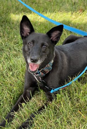 Please read Noelias ENTIRE BIO before emailing or submitting an adoption applicationName Noelia