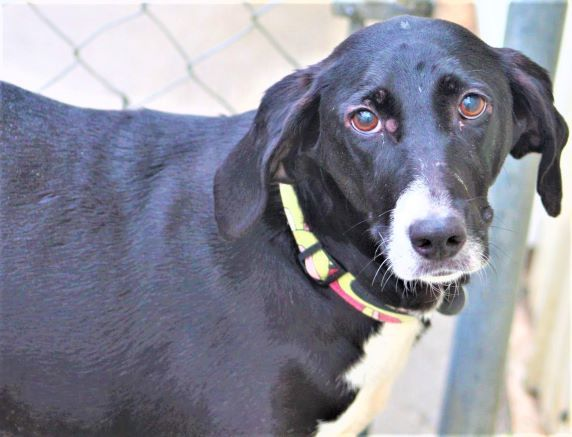 Tilly, an adoptable Hound & Pointer Mix in Kalamazoo, MI