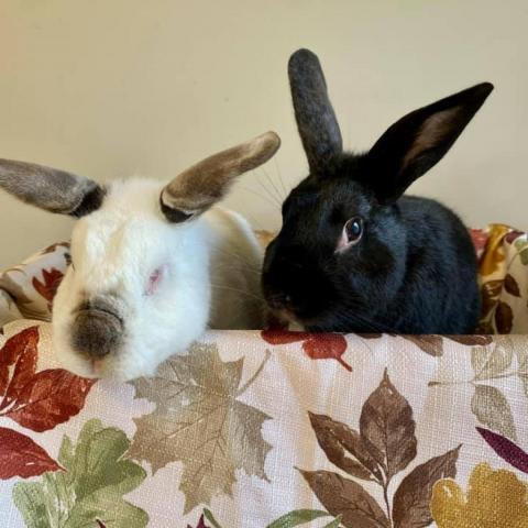 Chico & Sunny 1