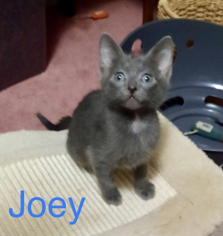 Joey 1