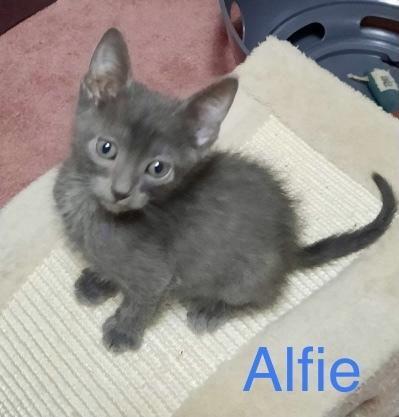 Alfie 1