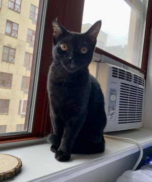 Poe is an adorable panther goddess with big amber eyes Extremely energetic and curious she loves t