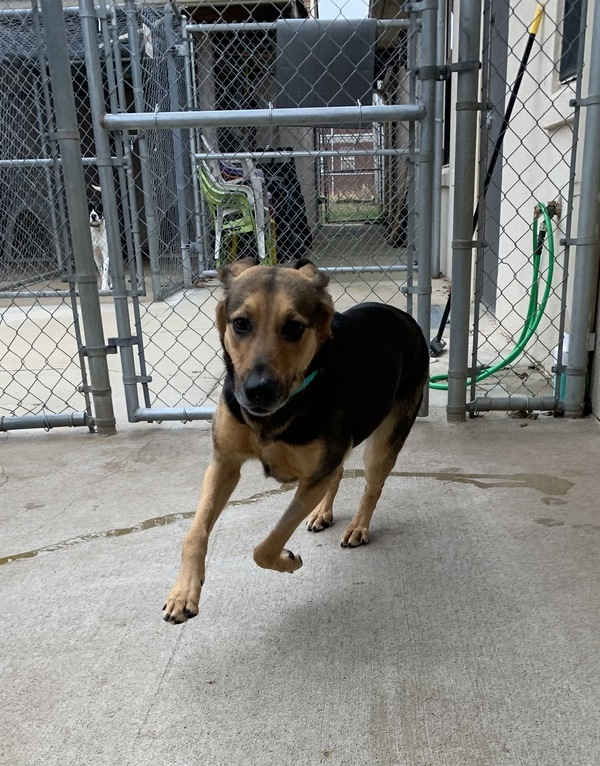Lola, an adoptable Hound Mix in Louisville, KY