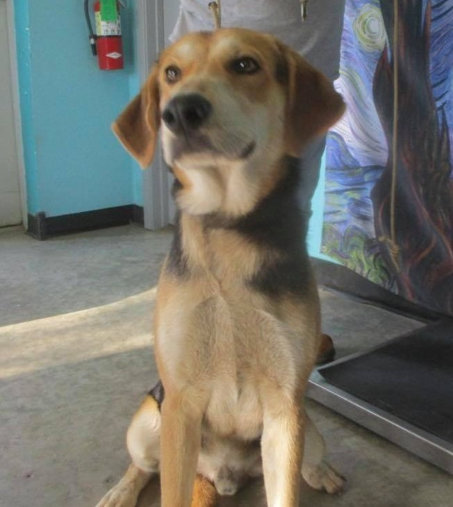 Forest, an adoptable Hound Mix in Clear Lake, IA