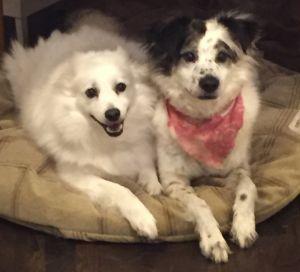 Ryan and Millie-Adoption Pending!