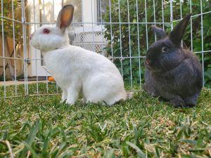 Crypto and Raven Bunny Rabbit Rabbit