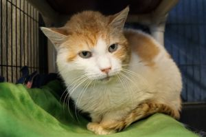 Sun Spot was found as a stray and brought to us so he would have a warm safe place to