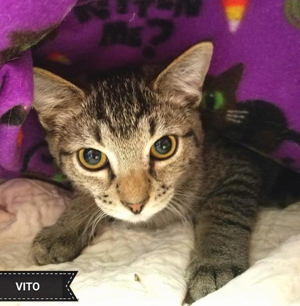 Vito 1