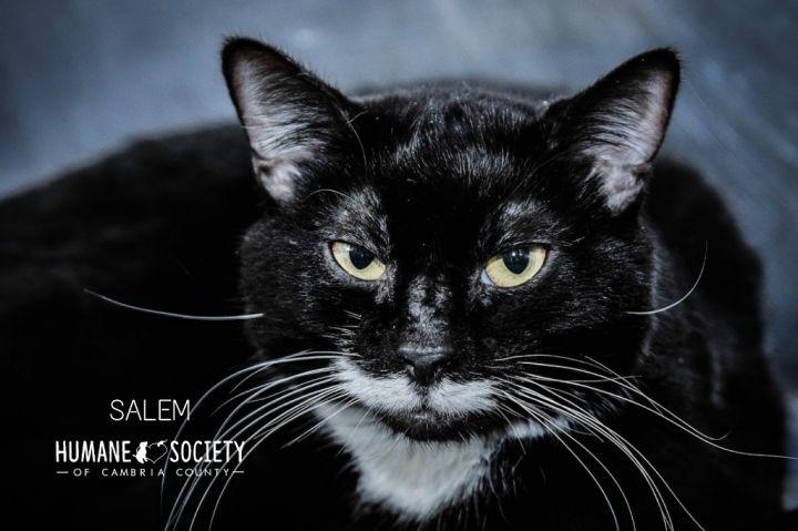 Salem 1