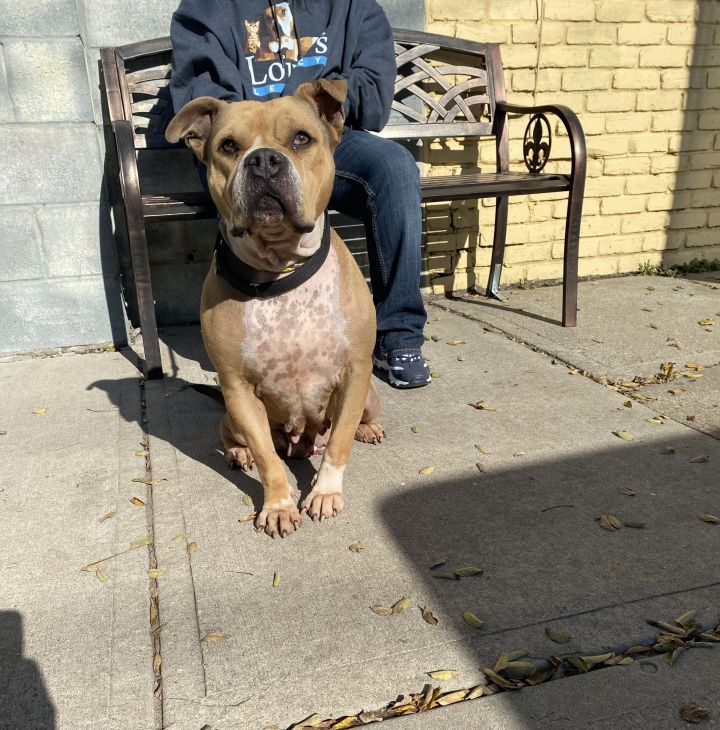 Stella- Adoption fee $25 Bissel Pet Promotion 2