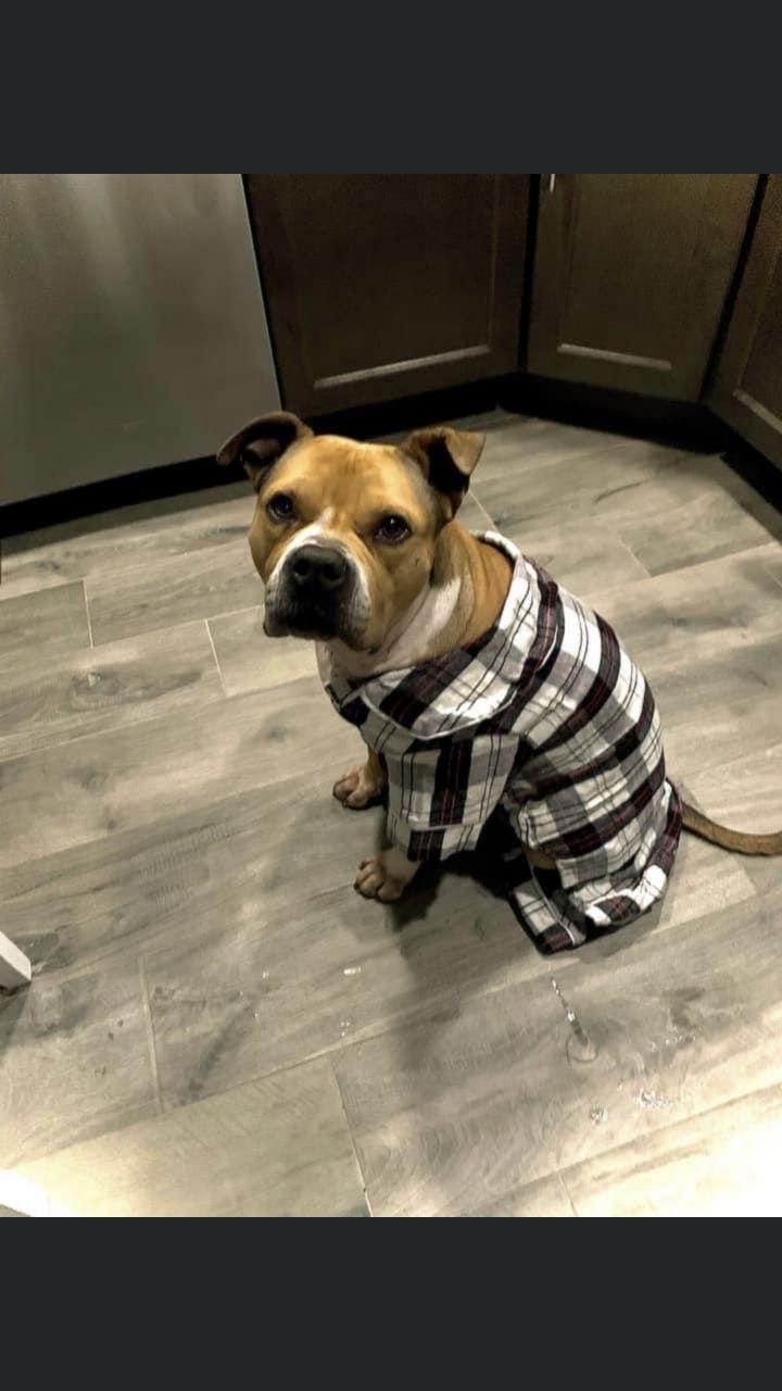 Stella- Adoption fee $25 Bissel Pet Promotion 1