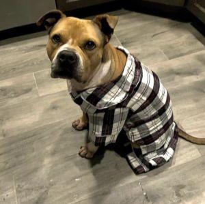Stella- Adoption fee $25 Bissel Pet Promotion
