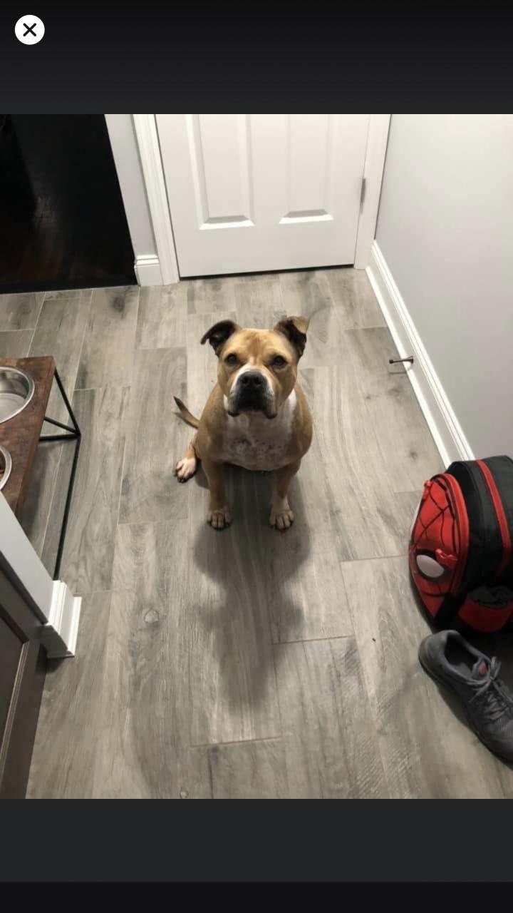 Stella- Adoption fee $25 Bissel Pet Promotion 4