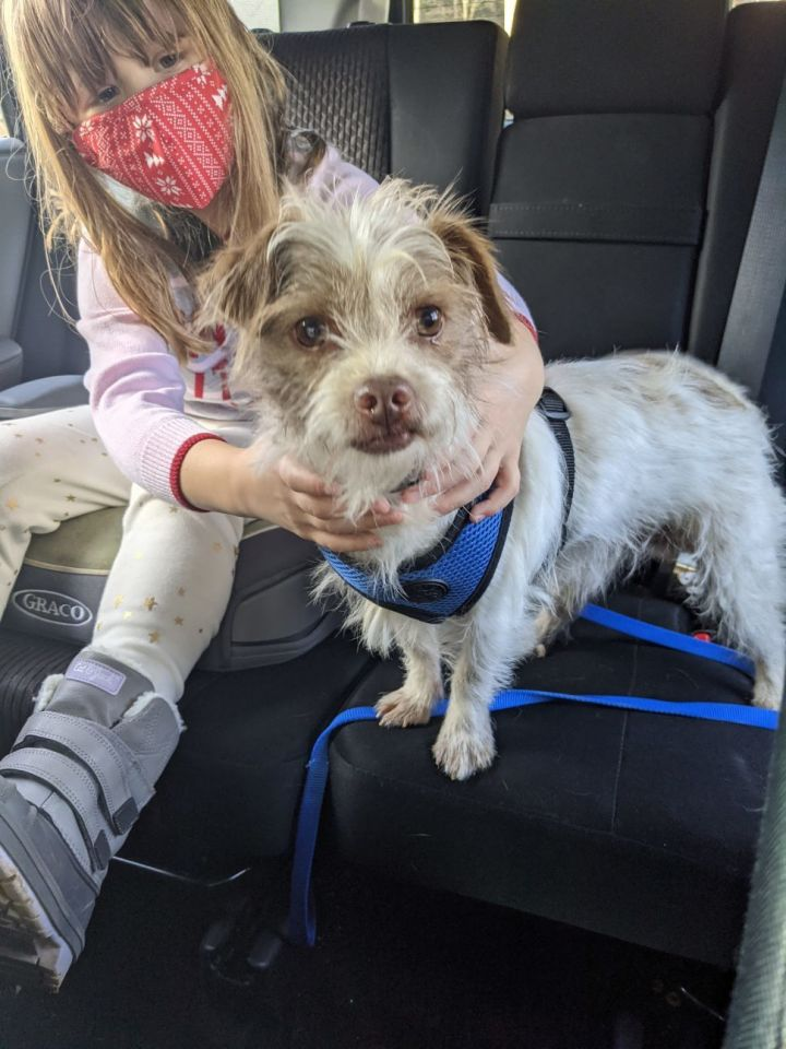 Charming Chad, an adopted Terrier Mix in Reston, VA