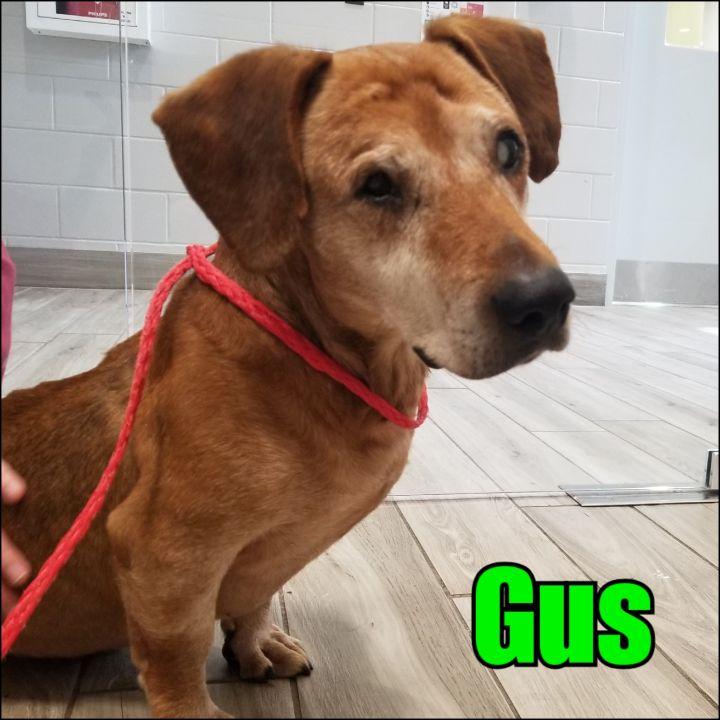 Gus 1