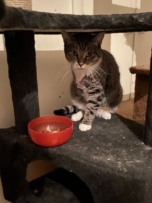 Pretty Polly was found on the streets of New Jersey Another rescue group was doing TNR trap neute