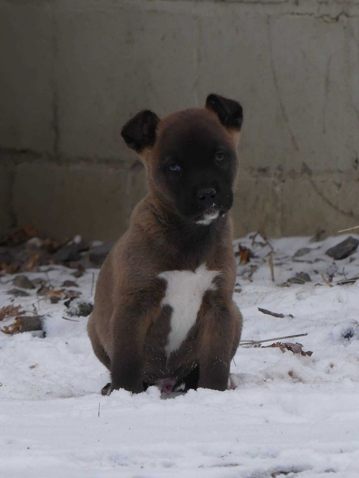 Dog For Adoption Donner A Mixed Breed In Watertown Wi Petfinder