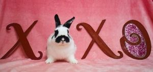 Otto is a very active young bunny He loves to play and needs lots of room to roam Otto can