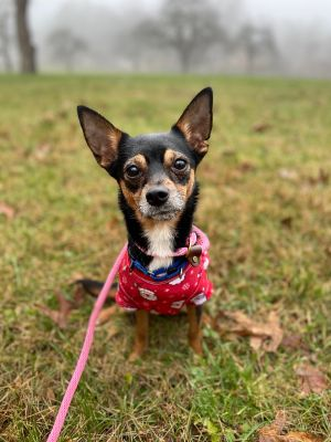 Incredibly cuddly preciously affectionate and hilariously spunky is Sally Mae all wrapped up into a