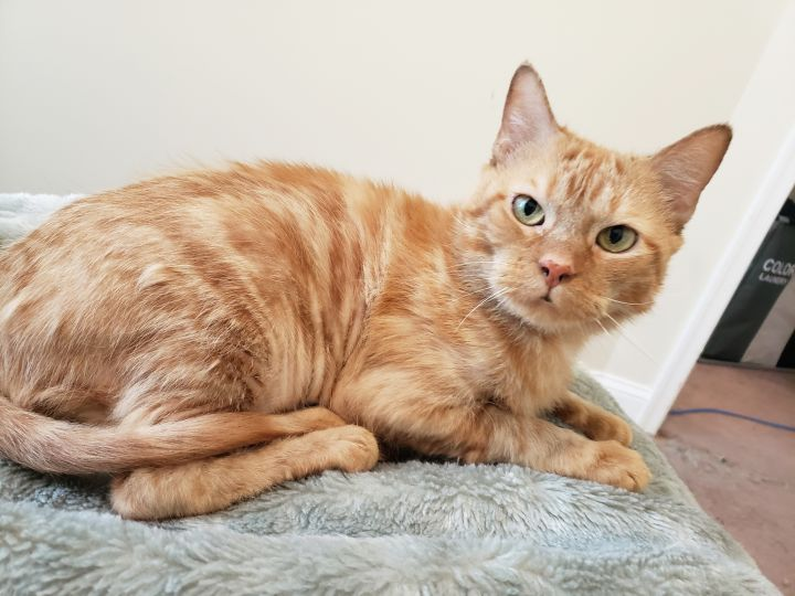 MONKEY!, an adoptable Domestic Short Hair in Philadelphia, PA