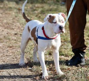 Big smushy face is what we see when we look at Sundance Hes a great dog who loves going for