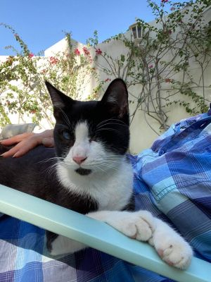 Felix is a handsome and loving 9-month old big kitten who is sure to light up your home He was