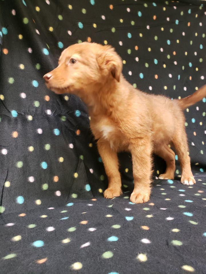 Comet-(Christy Noel's pup) 2