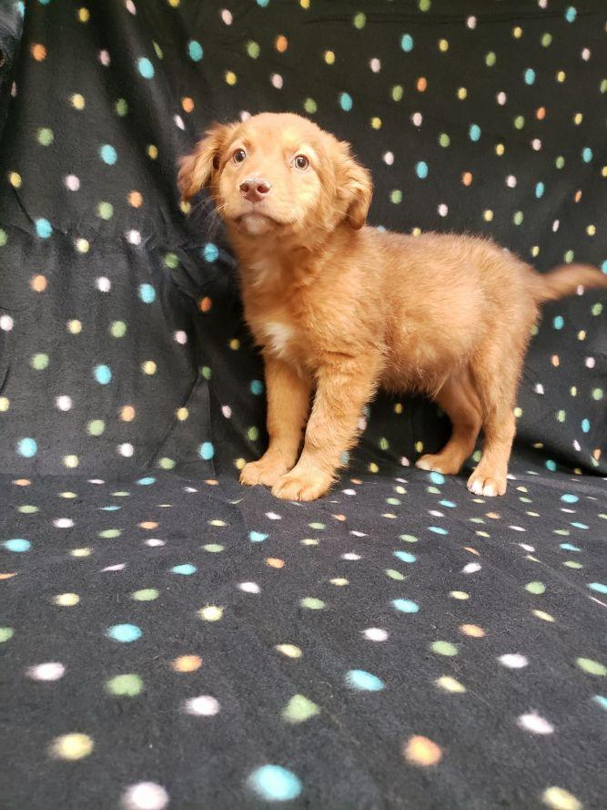 Comet-(Christy Noel's pup)