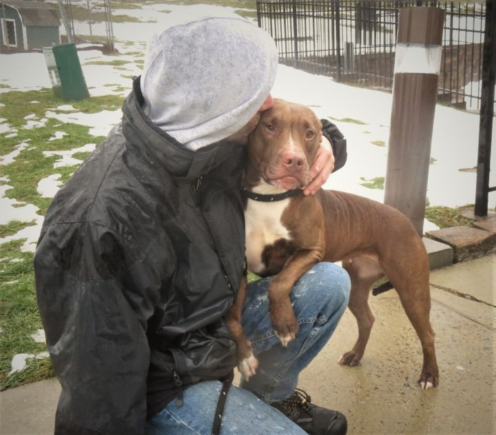 Honey, an adoptable Pit Bull Terrier Mix in Harrisburg, PA