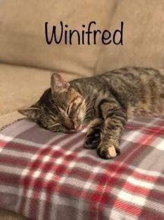 Winifred 4