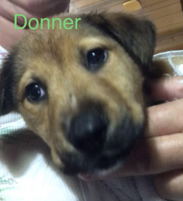 Dog For Adoption Donner A German Shepherd Dog Labrador Retriever Mix In Beeville Tx Petfinder