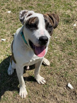 Ferris is estimated to be between 1-2 years old He LOVES other dogs- so a home with another dog to