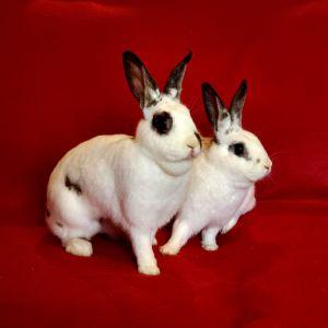 Betty & Barnaby (bonded pair)