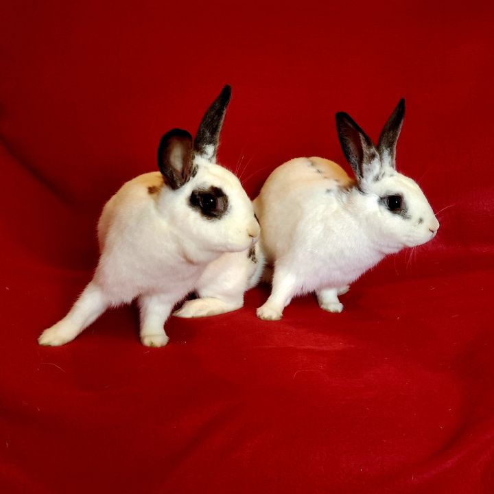 Betty & Barnaby (bonded pair) 3