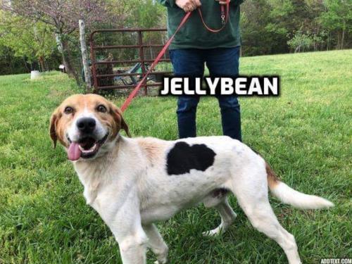 Jellybean 1