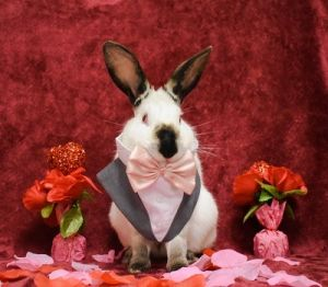 Rocco is very very friendly He would love to have a bunny friend Rabbits make wonderful indoor pet