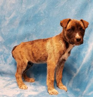 Please DO NOT message the rescue asking if this puppy is still available if a